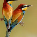 35+ Beautiful Birds Images download HD photos wallpaper pic