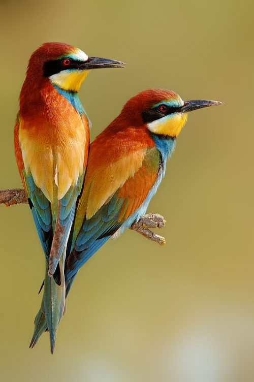 All beautiful birds images free download