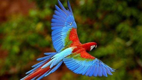 35 Beautiful Birds Images Download Hd Photos Wallpaper Pic Part