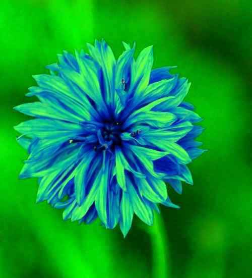 amazing image of flower for Whatsapp