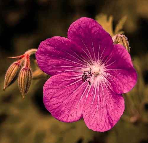 beautiful pic of flower free download