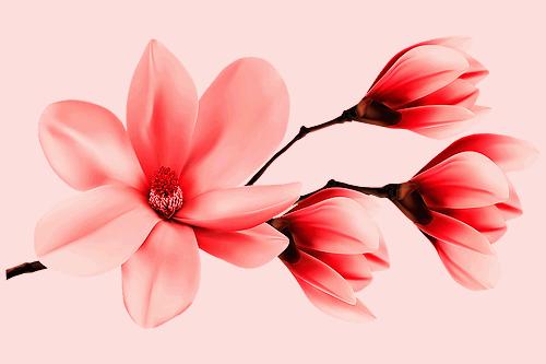 beautiful wallpaper of flower download