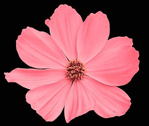 latest flower download for Whatapp