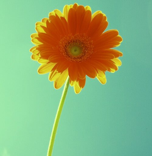 new pic of flower download