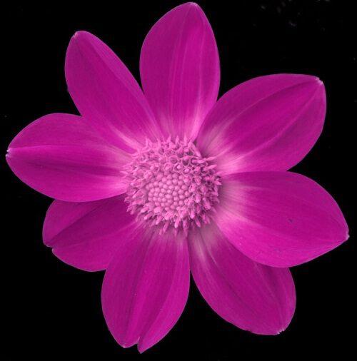 nice flower image free download