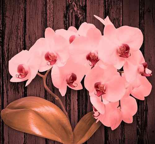 nice photo of flower download for Whatsapp