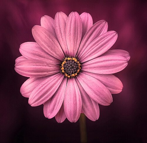 nice pic of flower download