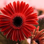 40 Beautiful flowers pictures download for wallpaper free