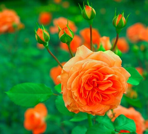 nice wallpaper of flower download for