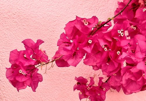 nice wallpaper of flowers for Whatsapp