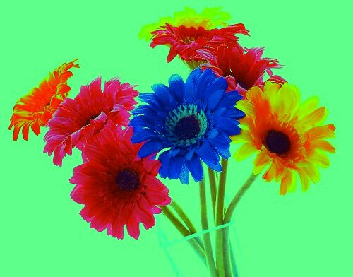 nice wallpaper of flowers for fb
