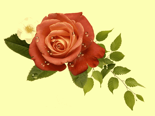 romatnic rose image for girlfriend