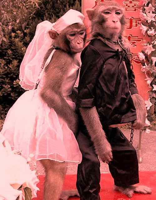 sweet monkey couple funny image download