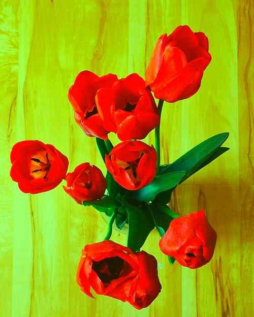 top pics of flower download for husband