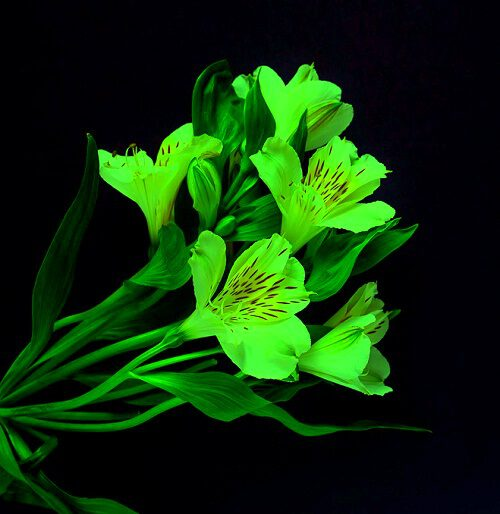 top pics of flowers for Whatsapp dp