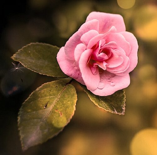 top picture of flower download