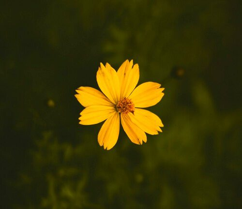 top picture of flower download for friends