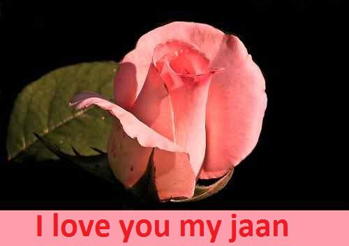 sweet rose love picture for girlfriend